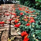 Flores de Portugal