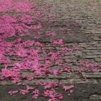 As folhas secas de Ricardo Terto